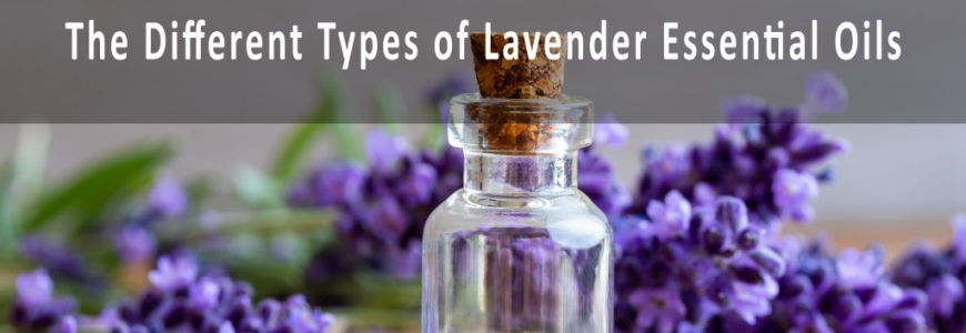 The different types of Lavender Essential Oils and Their Benefits