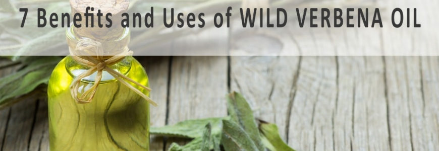 7 Superb Benefits and Uses of Wild Verbena Essential Oil