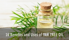16 Benefits and Uses of Tea Tree Essential Oil