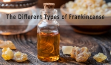Frankincense 101 - The 4 Primary Types of Frankincense and their Differences