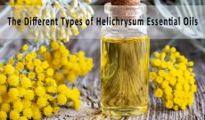 A Comprehensive Overview of The Different Types of Helichrysum Essential Oils