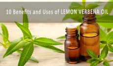 10 Iconic Benefits and Uses of Lemon Verbena Essential Oil